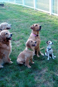 Chad, Bentley, Biscuit, Mia, and Jake